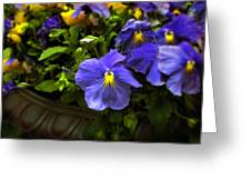 Pansy Planter Greeting Card