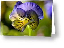 Pansy Portrait Greeting Card