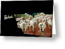 Pantenal Cows Greeting Card