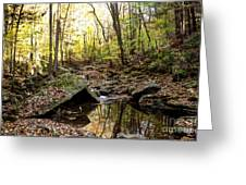 Panther Branch In Fall Greeting Card