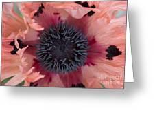 Papaver Orientale Pink Ruffles Greeting Card