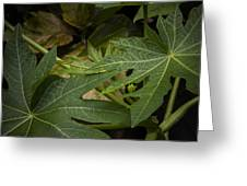 Papaya Leaves Greeting Card