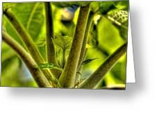 Papaya Shoot Greeting Card