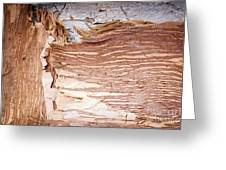 Paper Bark Background Greeting Card