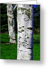 Paper Birch Trees Greeting Card