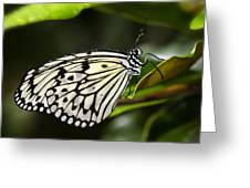 Paper Kite Butterfly On A Leaf  Greeting Card