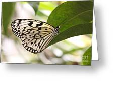Paper Kite On A Leaf Greeting Card