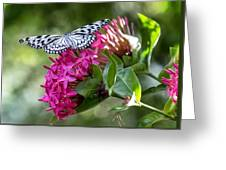 Paper Kite On Fluid Blossoms Greeting Card