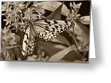 Paper Kite On Frangipani Flowers Greeting Card
