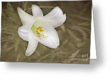 Paper Lily Greeting Card