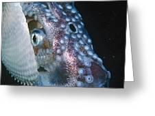 Paper Nautilus Port Phillip Bay Greeting Card
