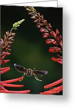 Paper Wasp In Flight Greeting Card