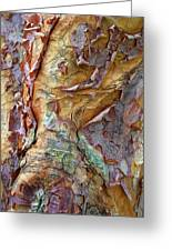Paperbark Abstract Greeting Card
