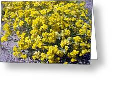 Paperflower Greeting Card