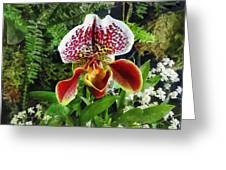 Paph Fiordland Sunset Orchid Greeting Card