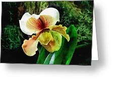 Paph Hellas Westonbirt Orchid Greeting Card