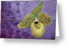 Paphiopedilum Malipoense Greeting Card