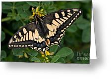 Papilio Machaon Butterfly Sitting On The Lucerne Plant Greeting Card
