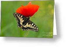 Papilio Machaon Butterfly Sitting On A Red Poppy Greeting Card