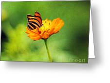 Papillon Greeting Card by Darren Fisher
