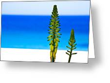 Paradise.... Greeting Card