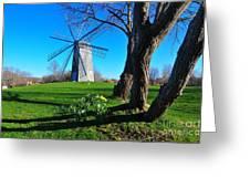 Paradise Park Windmill Greeting Card