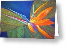 Paradise Pastel Greeting Card