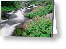 Paradise River And Spring Wildflowers Greeting Card