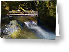 Paradise Whispers  Greeting Card
