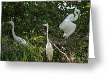 Parents Protecting The Nest Greeting Card