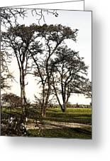 Park At Blackie Spit Greeting Card