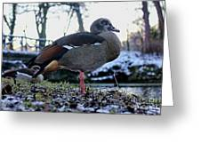 Park Ducks Greeting Card