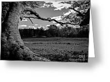 Park In Black And White Greeting Card