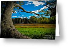 Park In Massachusetts In The Fall Greeting Card
