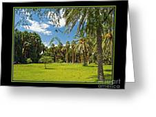 Park Open Area Greeting Card