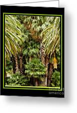 Park Palms Greeting Card