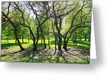 Park Trees Greeting Card
