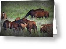 Parker Ranch Horses Greeting Card