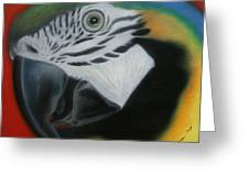 Parrot 1 Greeting Card