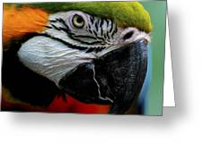 Parrot 13 Greeting Card