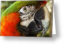 Parrot 26 Greeting Card