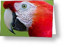 Parrot 35 Greeting Card
