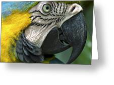 Parrot 9 Greeting Card