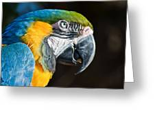 Parrot Close Up Greeting Card