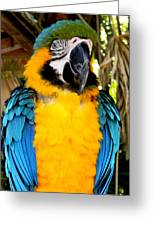 Parrot II Greeting Card
