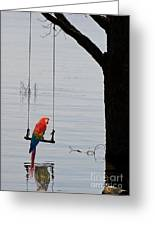 Parrot On A Swing Greeting Card