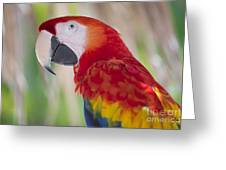 Parrot On Isla Tortuga-207 Greeting Card