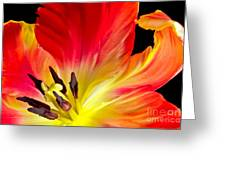Parrot Tulip On Fire Greeting Card