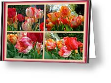 Parrot Tulips In Springtime Philadelphia Greeting Card