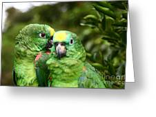 Parrot Whispers Greeting Card
